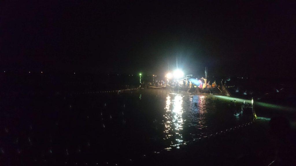 ホタルイカ漁海上観光